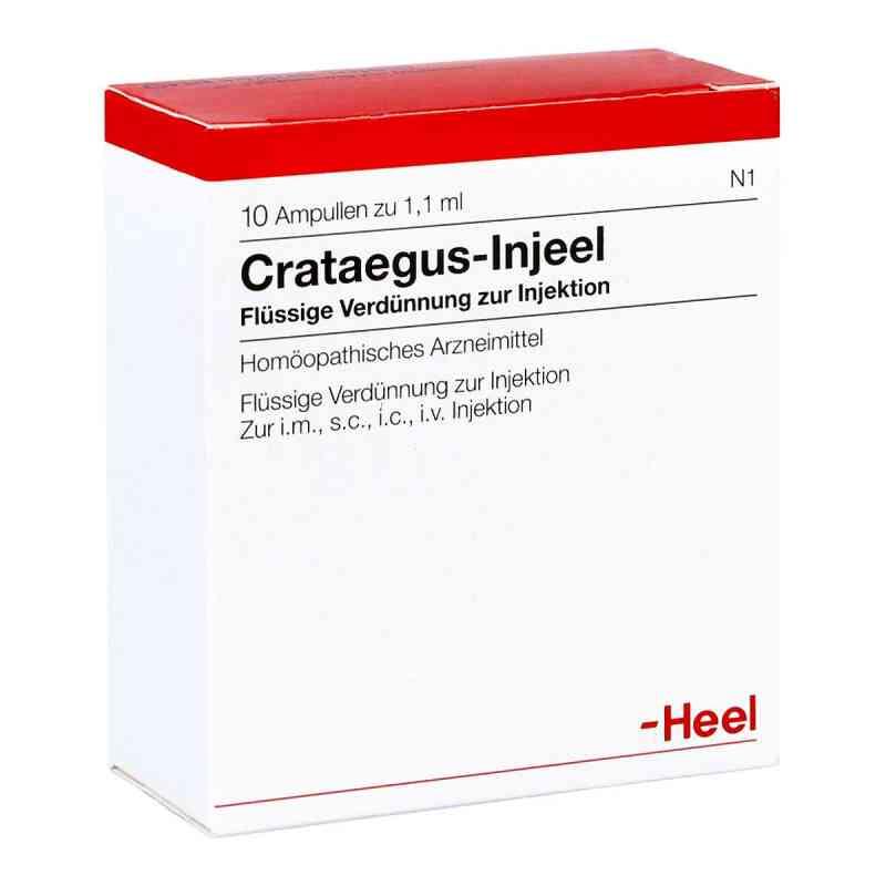Crataegus Injeel Ampullen  bei versandapo.de bestellen