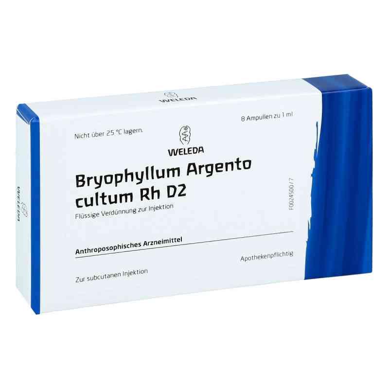 Bryophyllum Argento Cultum Rh D 2 Ampullen  bei versandapo.de bestellen