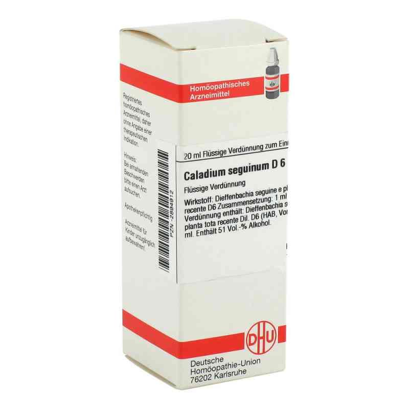 Caladium Seguinum D 6 Dilution  bei versandapo.de bestellen