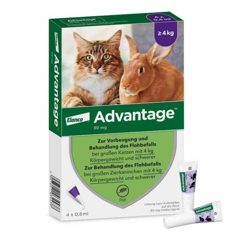 Advantage 80 mg für gr.Katzen und gr.Zierkaninchen  bei versandapo.de bestellen