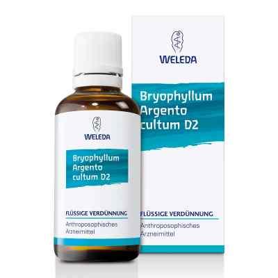 Bryophyllum Argento Cultum Dilution D 2  bei versandapo.de bestellen
