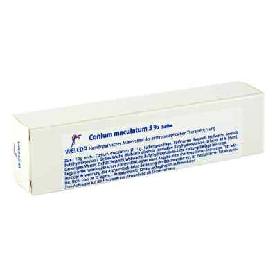 Conium Maculatum 5% Salbe  bei versandapo.de bestellen