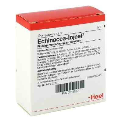 Echinacea Injeel Ampullen  bei versandapo.de bestellen