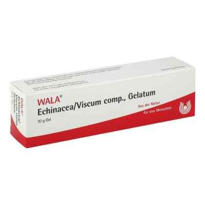 Echinacea/viscum compositus  Gelatum  bei versandapo.de bestellen