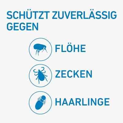 Frontline Spot on Hund 10 veterinär Lösung gegen Flöhe und Zecke  bei versandapo.de bestellen