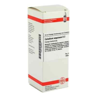 Caladium Seguinum D 2 Dilution  bei versandapo.de bestellen