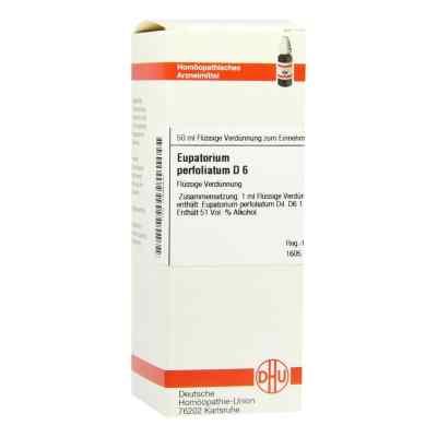 Eupatorium Perfoliatum D 6 Dilution  bei versandapo.de bestellen