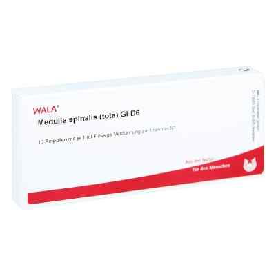 Medulla Spinalis Tota Gl D 6 Ampullen  bei versandapo.de bestellen