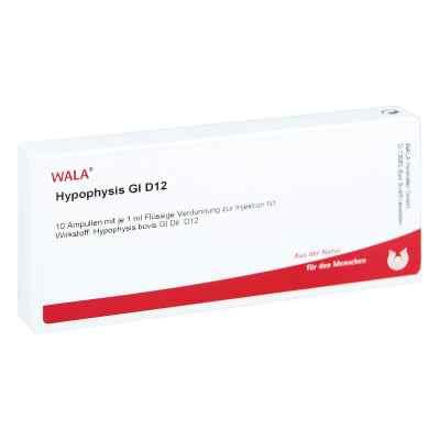 Hypophysis Gl D 12 Ampullen  bei versandapo.de bestellen
