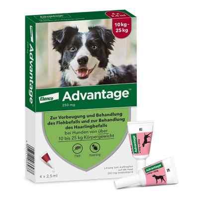 Advantage 250 für Hunde Lösung  bei versandapo.de bestellen