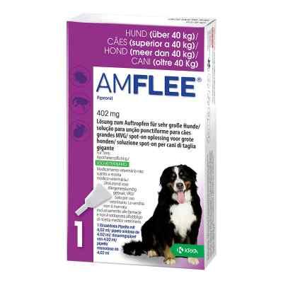 Amflee 402 mg Lösung zur, zum Auftropfen für sehr gr.Hunde  bei versandapo.de bestellen