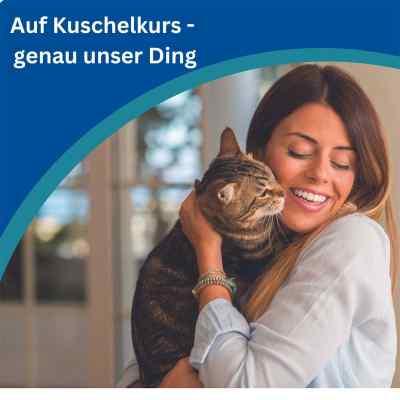 Amflee Combo Katze  bei versandapo.de bestellen
